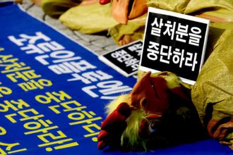 """정 총리 """"AI 예방적 살처분 기준 3㎞, 최선인지 검토"""""""